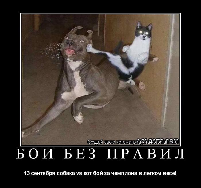 Котоматрица: бои без правил 13 сентября собака vs кот бой за чемпиона в легком весе!