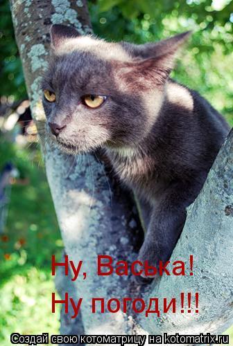 Котоматрица: Ну, Васька!  Ну погоди!!!
