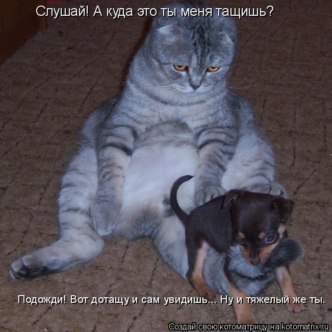 Котоматрица: Слушай! А куда это ты меня тащишь? Подожди! Вот дотащу и сам увидишь... Ну и тяжелый же ты.