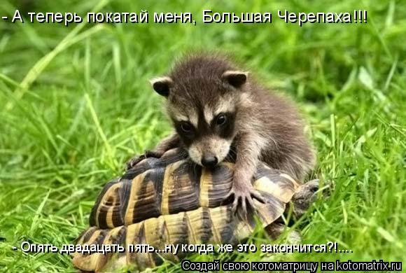 Котоматрица: - А теперь покатай меня, Большая Черепаха!!! - Опять двадацать пять...ну когда же это закончится?!....