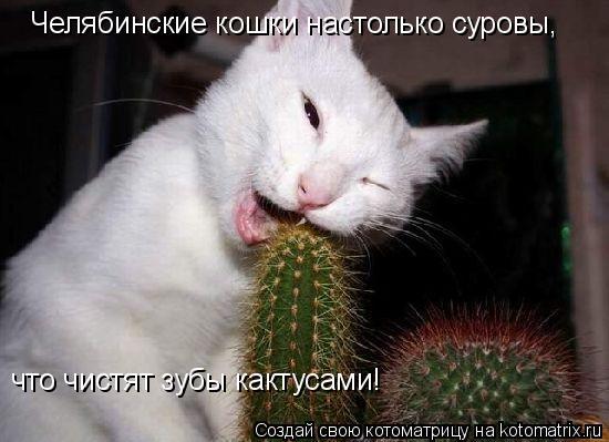Котоматрица: Челябинские кошки настолько суровы, что чистят зубы кактусами!