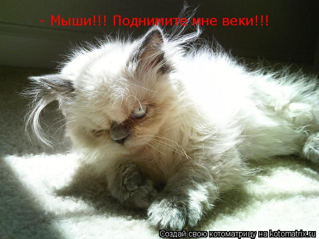 Котоматрица: - Мыши!!! Поднимите мне веки!!!