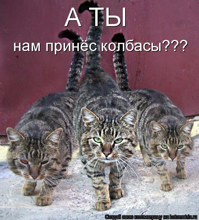 Котоматрица: А ТЫ нам принёс колбасы???