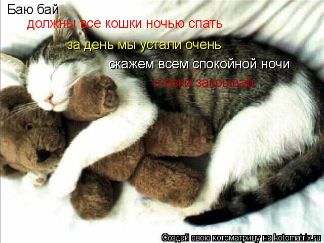 Котоматрица: Баю бай должны все кошки ночью спать за день мы устали очень скажем всем спокойной ночи глазки закрывай