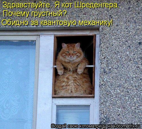 Котоматрица: Здравствуйте. Я кот Шреденгера. Почему грустный? Обидно за квантовую механику!