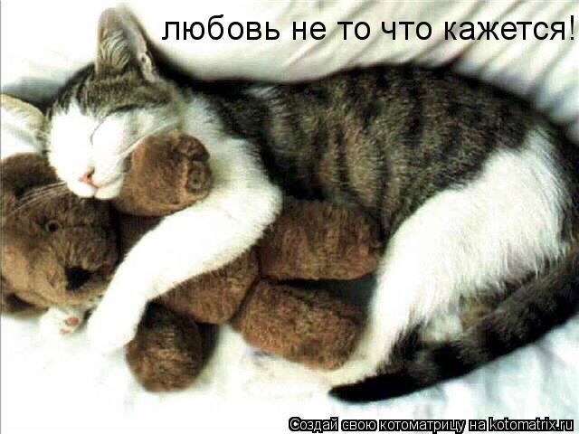 Котоматрица: любовь не то что кажется!