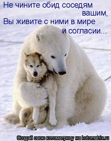 Котоматрица: Не чините обид соседям  вашим,  Вы живите с ними в мире  и согласии...