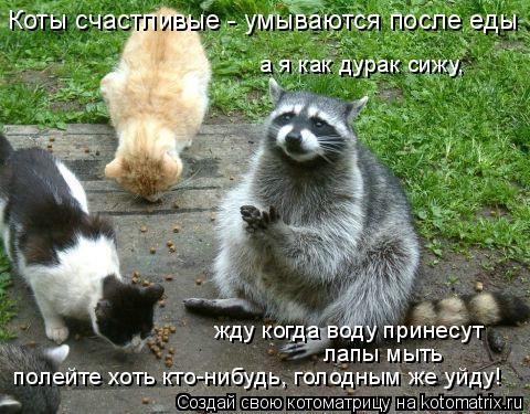 Котоматрица: Коты счастливые - умываются после еды а я как дурак сижу,  жду когда воду принесут лапы мыть полейте хоть кто-нибудь, голодным же уйду!