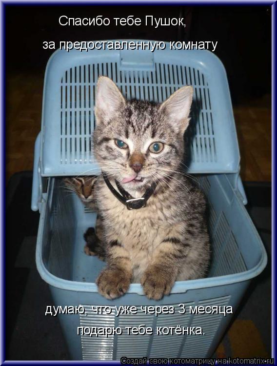 Котоматрица: Спасибо тебе Пушок, за предоставленную комнату думаю, что уже через 3 месяца подарю тебе котёнка.