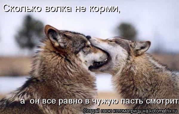 Котоматрица: Сколько волка не корми, а  он все равно в чужую пасть смотрит.