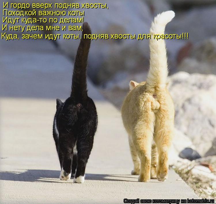 Котоматрица: И гордо вверх подняв хвосты, Походкой важною коты Идут куда-то по делам! И нету дела мне и вам, Куда, зачем идут коты, подняв хвосты для красот
