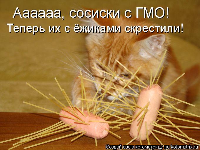 Котоматрица: Аааааа, сосиски с ГМО! Теперь их с ёжиками скрестили!