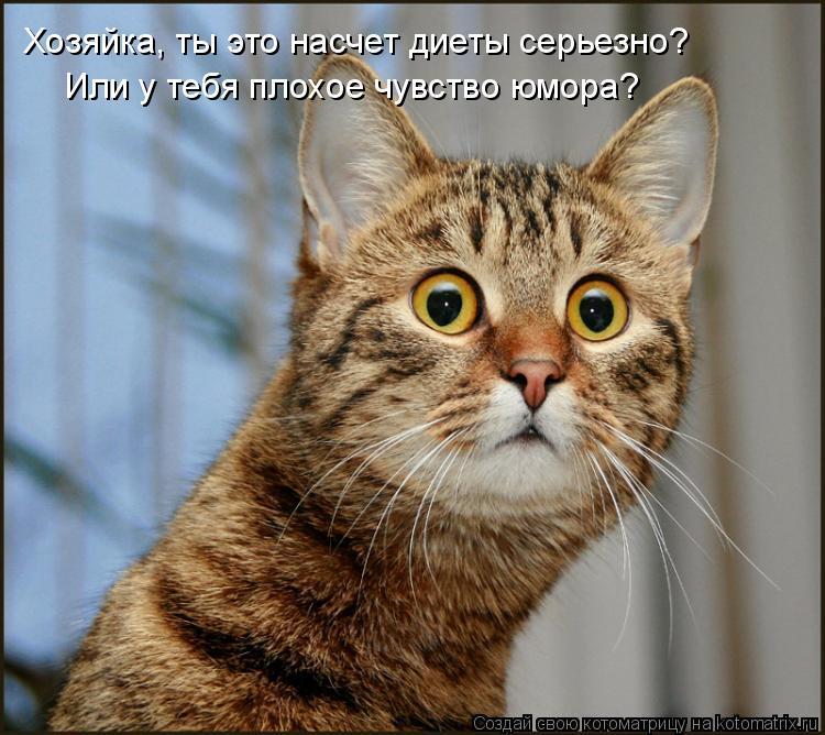 Котоматрица: Хозяйка, ты это насчет диеты серьезно? Или у тебя плохое чувство юмора?