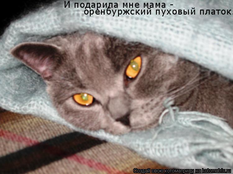 Котоматрица: И подарила мне мама - оренбуржский пуховый платок.