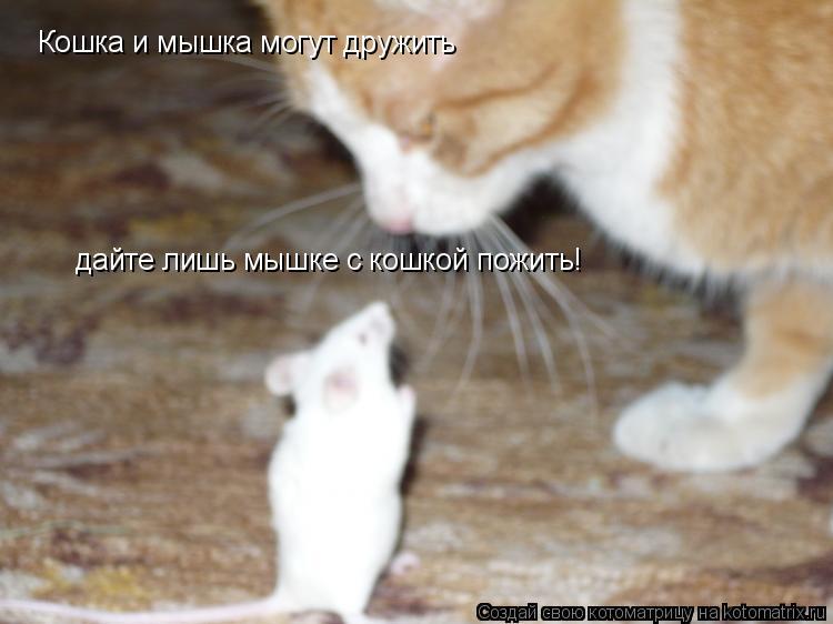 Котоматрица: Кошка и мышка могут дружить дайте лишь мышке с кошкой пожить!