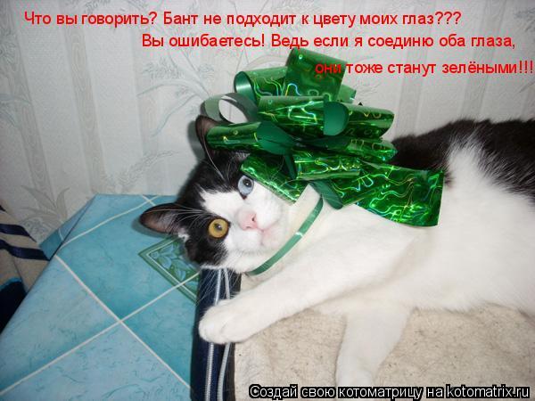 Котоматрица: Что вы говорить? Бант не подходит к цвету моих глаз??? Вы ошибаетесь! Ведь если я соединю оба глаза, они тоже станут зелёными!!!
