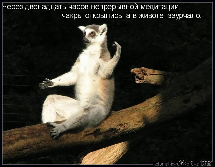 Котоматрица: Через двенадцать часов непрерывной медитации  чакры открылись, а в животе  заурчало...