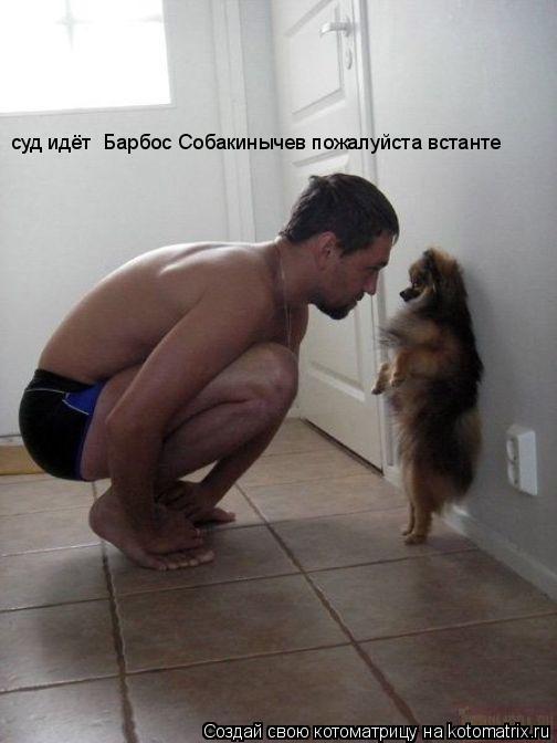 Котоматрица: суд идёт  Барбос Собакинычев пожалуйста встанте