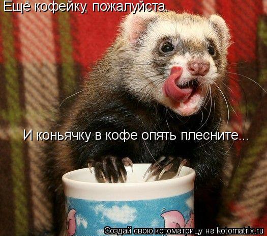 Котоматрица: Ещё кофейку, пожалуйста. И коньячку в кофе опять плесните...