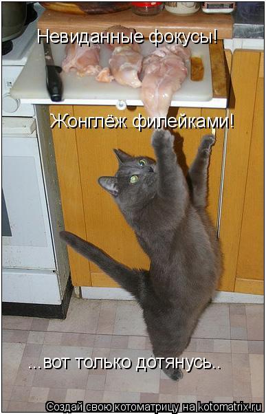 Котоматрица: Жонглёж филейками! ...вот только дотянусь.. Невиданные фокусы!