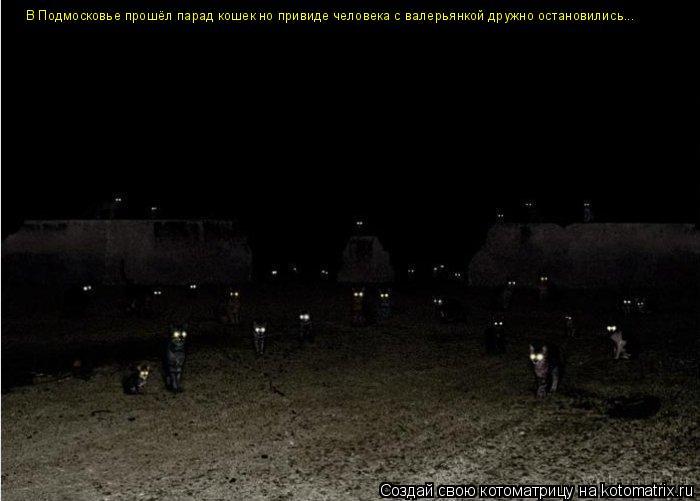 Котоматрица: В Подмосковье прошёл парад кошек но привиде человека с валерьянкой дружно остановились...