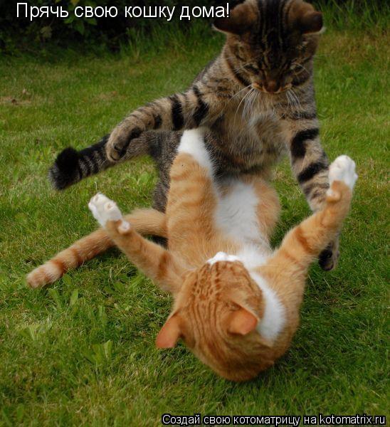 Котоматрица: Прячь свою кошку дома!