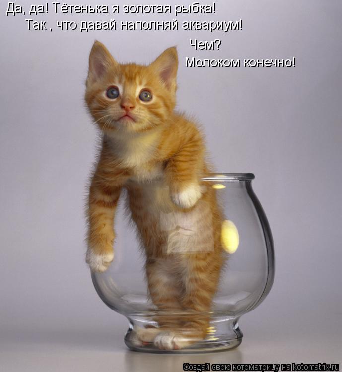 Котоматрица: Да, да! Тётенька я золотая рыбка! Так , что давай наполняй аквариум! Чем? Молоком конечно!