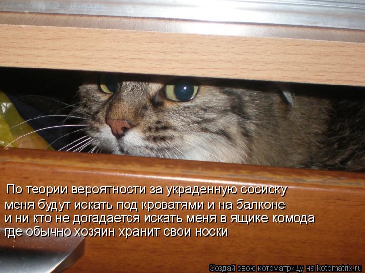 Котоматрица: По теории вероятности за украденную сосиску меня будут искать под кроватями и на балконе и ни кто не догадается искать меня в ящике комода
