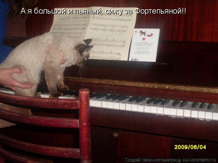 Котоматрица: А я большой и пьяный, сижу за Фортепьяной!!