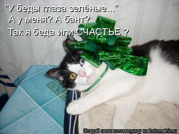 "Котоматрица: ""У беды глаза зелёные..."" А у меня? А бант? Так я беда или СЧАСТЬЕ ?"