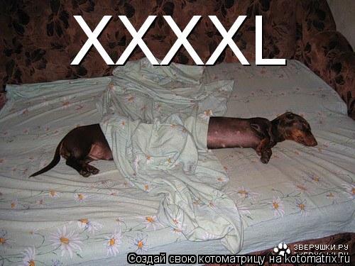 Котоматрица: XXXXL