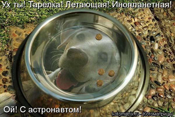 Котоматрица: Ух ты! Тарелка! Летающая! Инопланетная! Ой! С астронавтом!