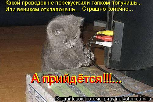 Котоматрица: Какой проводок не перекуси:или тапком получишь... Или веником отхлапочешь... Страшно конечно... А прийдётся!!!... А прийдётся!!!...