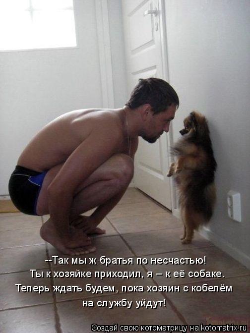 Котоматрица: --Так мы ж братья по несчастью! Ты к хозяйке приходил, я -- к её собаке. Теперь ждать будем, пока хозяин с кобелём на службу уйдут!