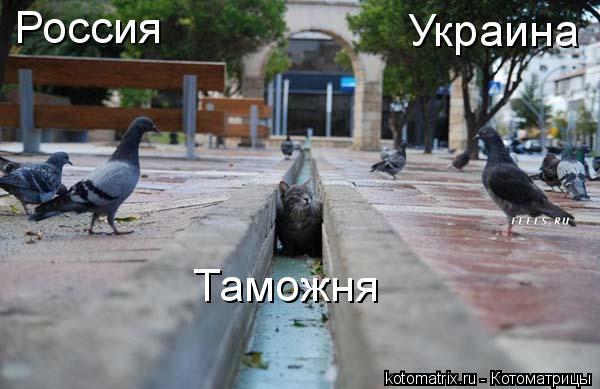 Котоматрица: Россия Украина Таможня