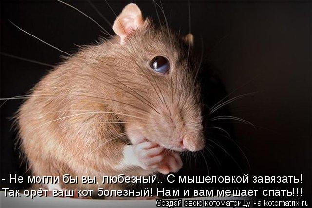 Котоматрица: - Не могли бы вы, любезный.. С мышеловкой завязать! Так орёт ваш кот болезный! Нам и вам мешает спать!!!