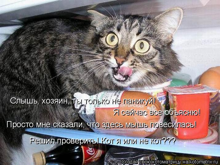 Котоматрица: Слышь, хозяин, ты только не паникуй!  Я сейчас все объясню! Просто мне сказали, что здесь мышь повесилась! Решил проверить! Кот я или не кот??? Р