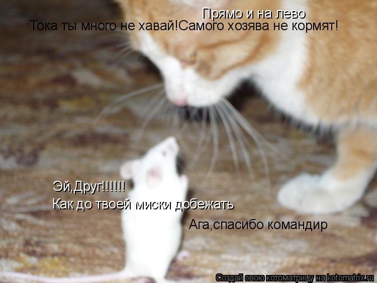 Котоматрица: Эй,Друг!!!!!! Как до твоей миски добежать Прямо и на лево Ага,спасибо командир Тока ты много не хавай!Самого хозява не кормят!
