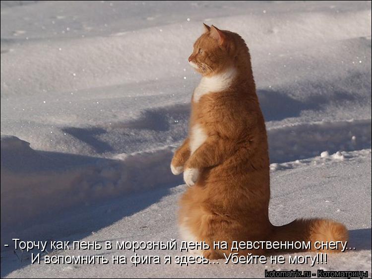 Котоматрица: - Торчу как пень в морозный день на девственном снегу... И вспомнить на фига я здесь... Убейте не могу!!!