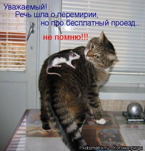 Котоматрица: Уважаемый!  Речь шла о перемирии,  но про бесплатный проезд..  не помню!!!