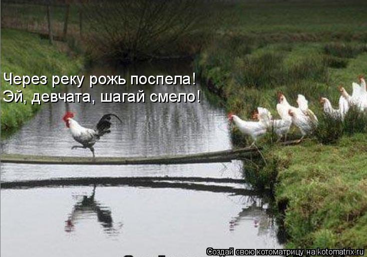 Котоматрица: Через реку рожь поспела! Эй, девчата, шагай смело!