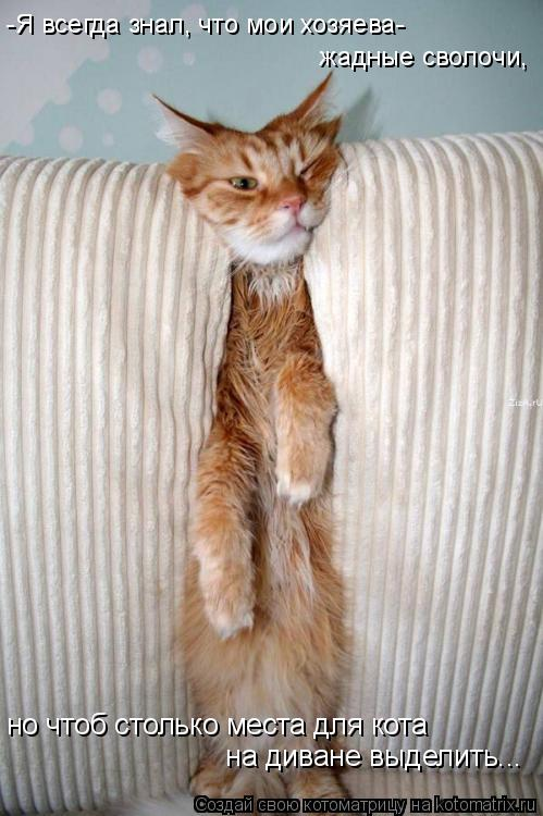 Котоматрица: -Я всегда знал, что мои хозяева-  жадные сволочи, но чтоб столько места для кота  на диване выделить...