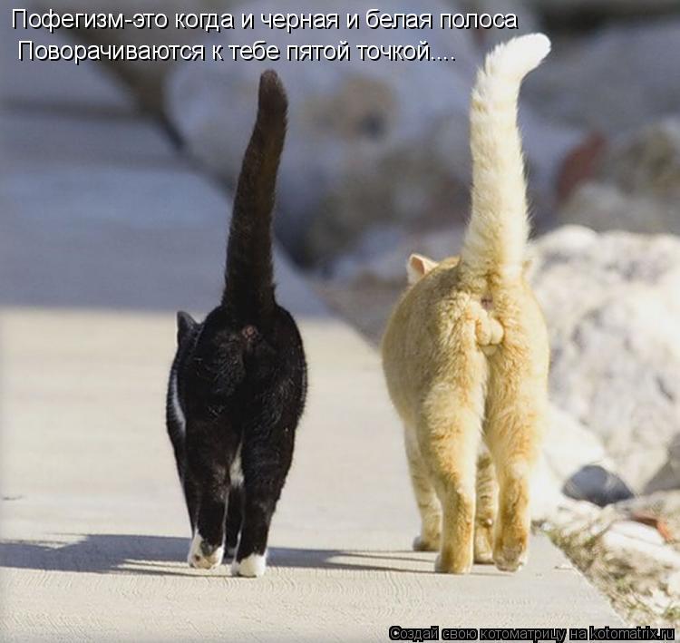 Котоматрица: Пофегизм-это когда и черная и белая полоса   Поворачиваются к тебе пятой точкой....