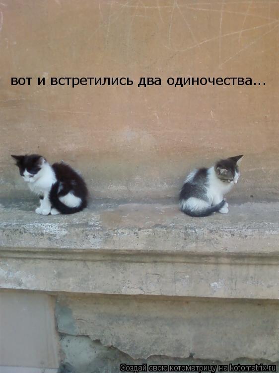 Котоматрица: вот и встретились два одиночества...