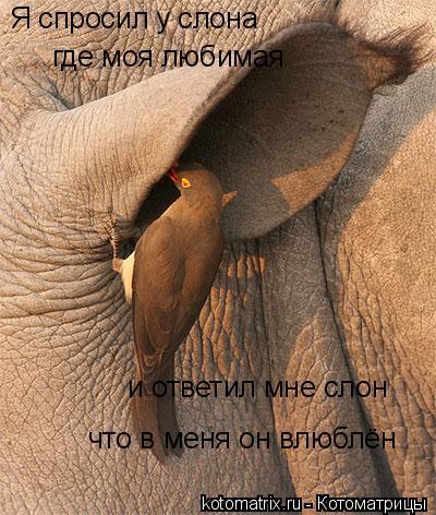 Котоматрица: Я спросил у слона где моя любимая и ответил мне слон что в меня он влюблён