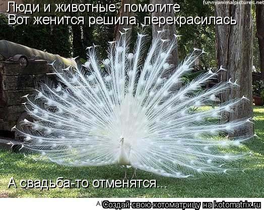 Котоматрица: Люди и животные, помогите Вот женится решила, перекрасилась Вот женится решила, перекрасилась А свадьба-то отменятся...