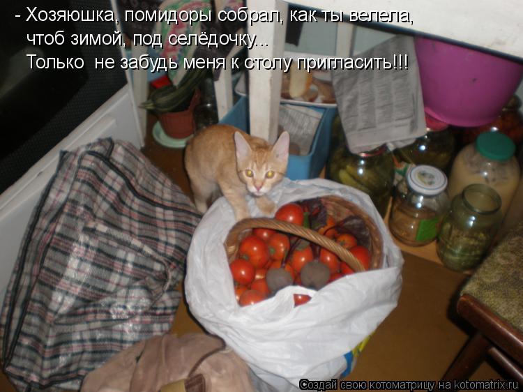 Котоматрица: - Хозяюшка, помидоры собрал, как ты велела, чтоб зимой, под селёдочку... Только  не забудь меня к столу пригласить!!!