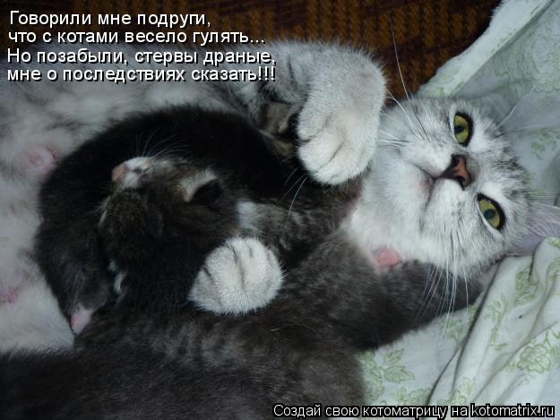 Котоматрица: Говорили мне подруги, что с котами весело гулять... Но позабыли, стервы драные, мне о последствиях сказать!!!
