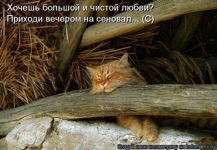 Котоматрица: Хочешь большой и чистой любви? Приходи вечером на сеновал... (С)