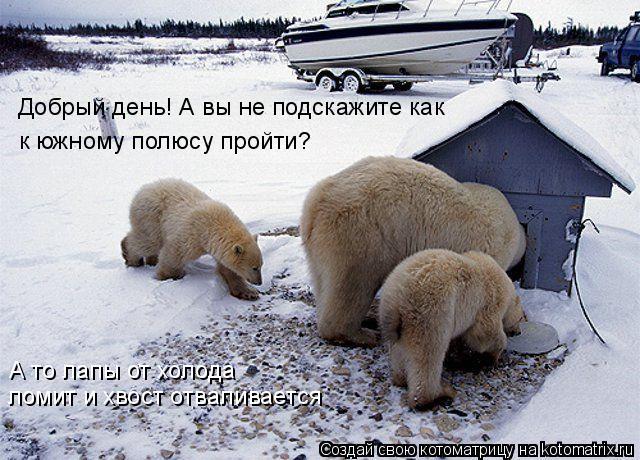 Котоматрица: Добрый день! А вы не подскажите как  к южному полюсу пройти? ломит и хвост отваливается А то лапы от холода